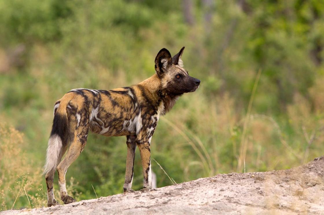 Дикая природа Африки: хищники