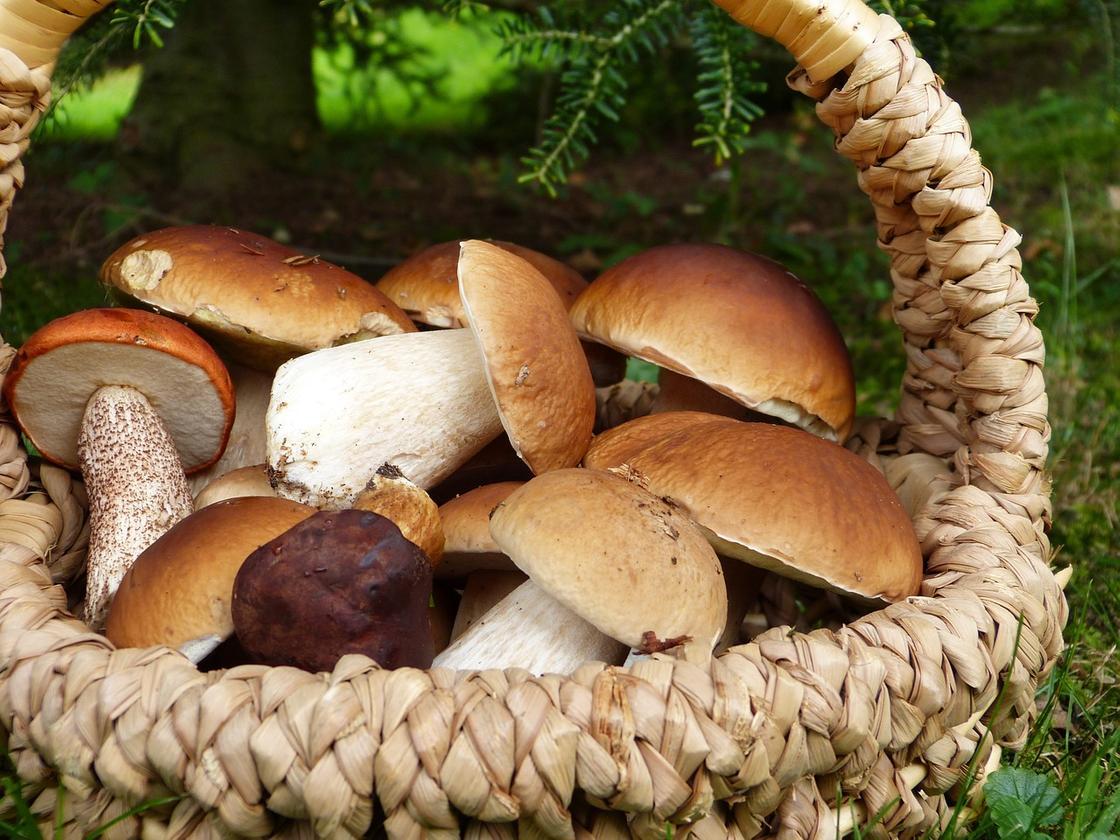 Блюда из белых грибов