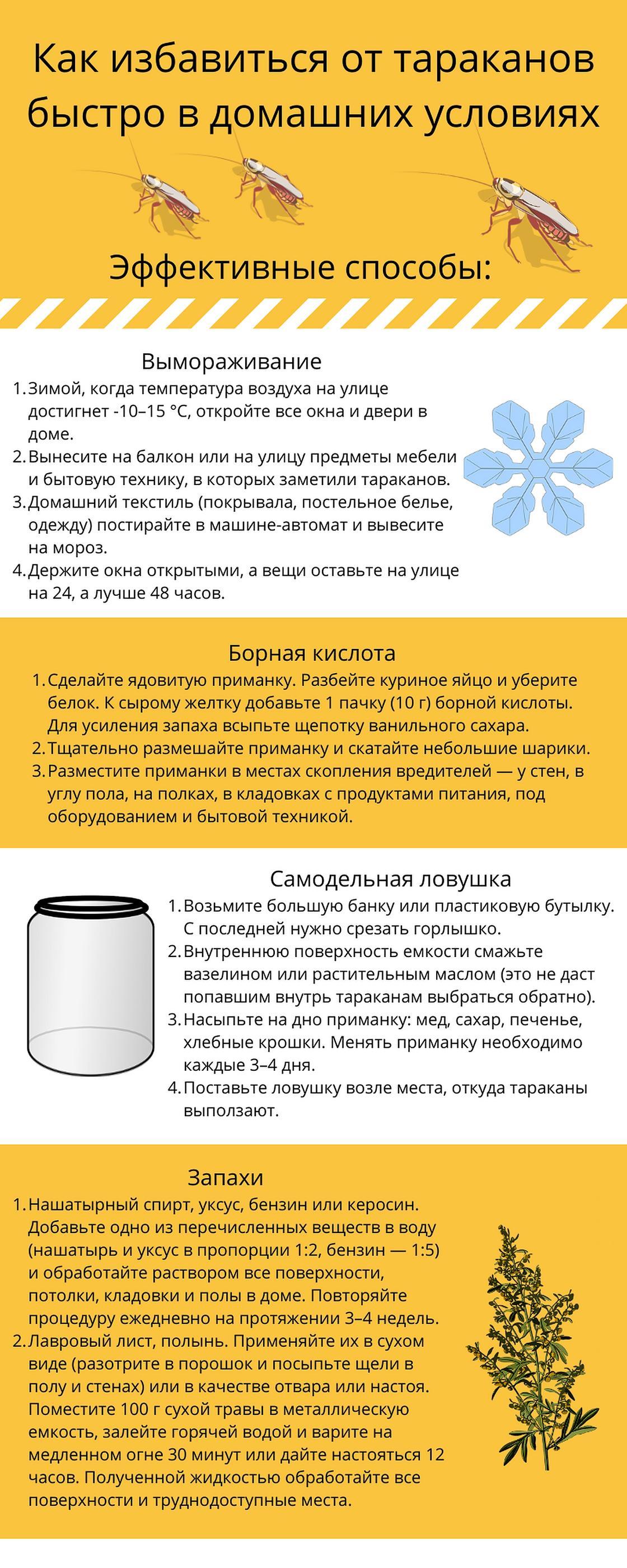 Инфографика: как избавиться от тараканов