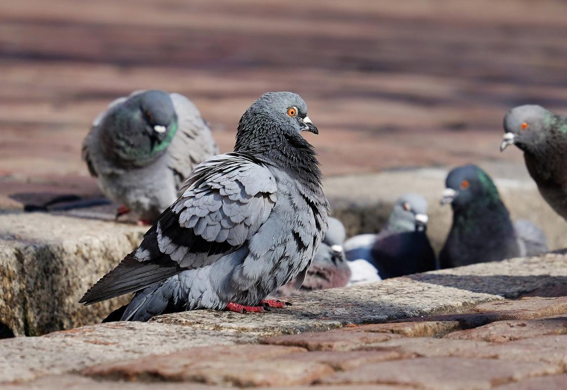 Замакима рассказал версии гибели голубей в парке Алматы