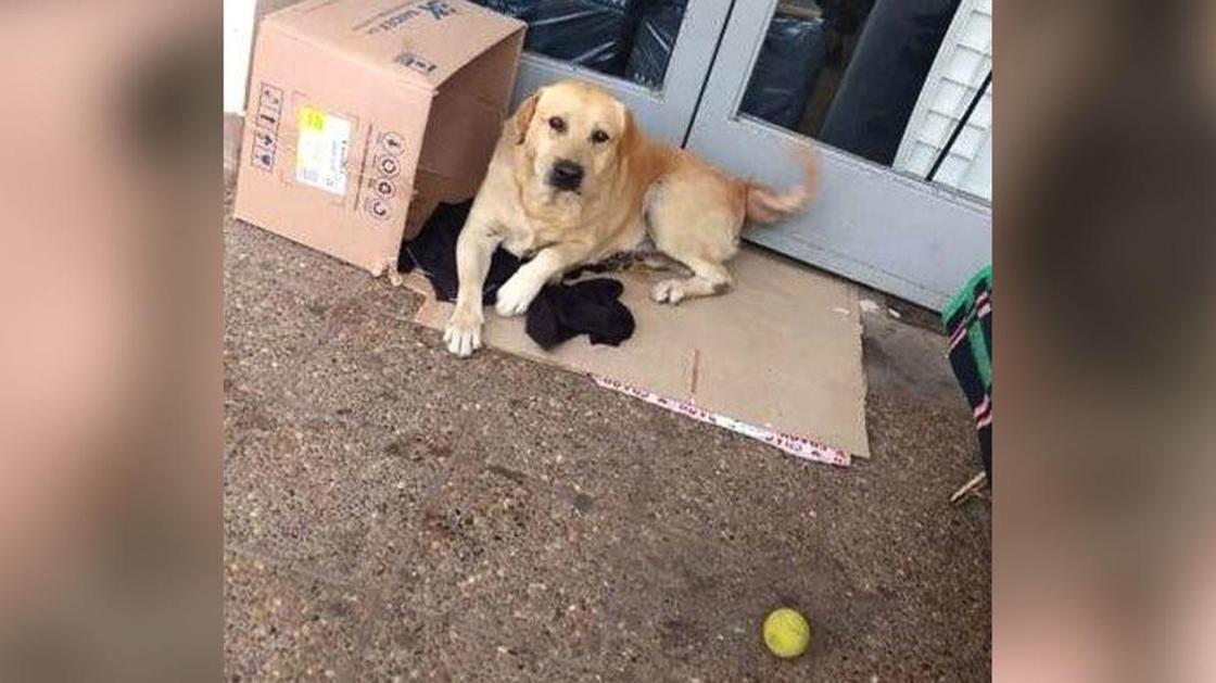 Пес уже неделю ждет умершего хозяина у дверей больницы (фото)