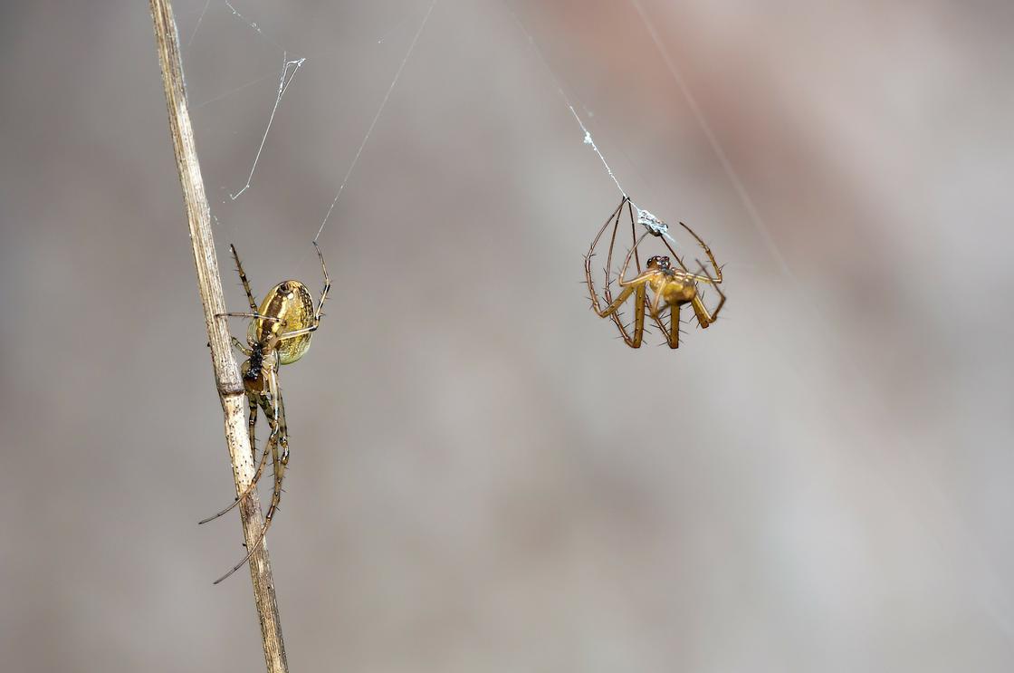 Два паука