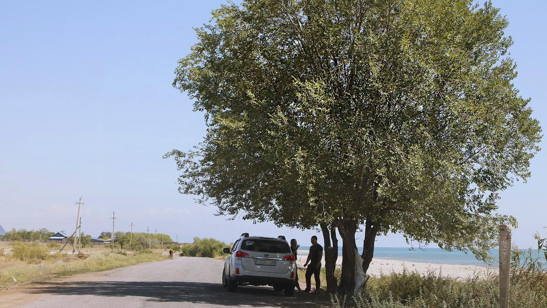 Пара стоит возле машины под деревом