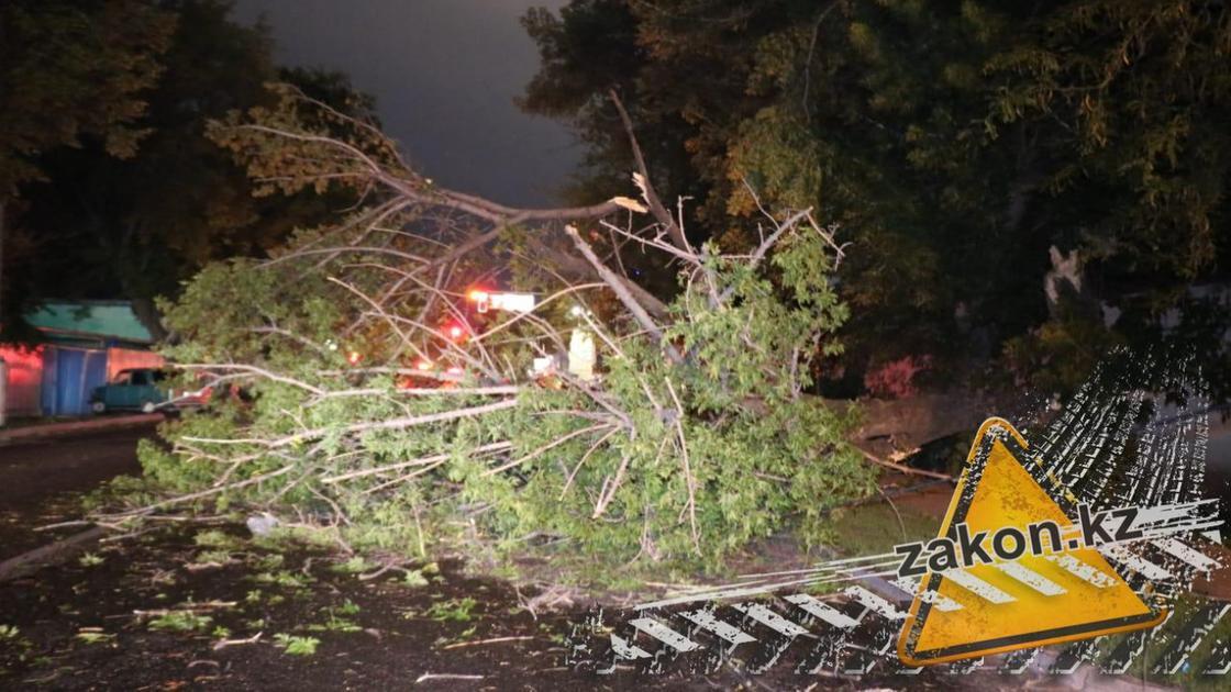Дерево упало,оборвало провода и перегородило движение на Жангельдина в Алматы (фото)