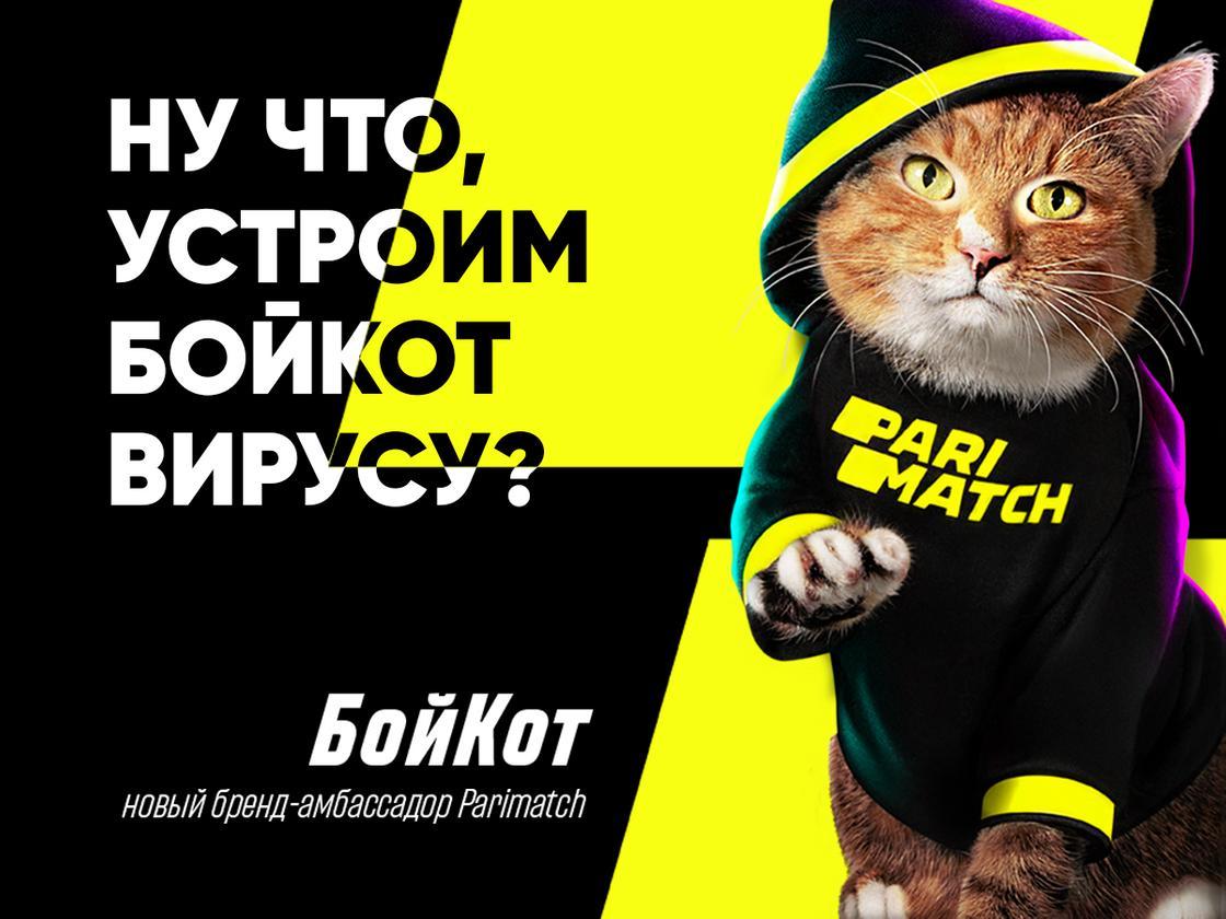 Рыжий кот стал амбасадором компании Parimatch