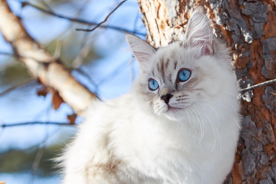 Породы кошек: названия, описания, фото