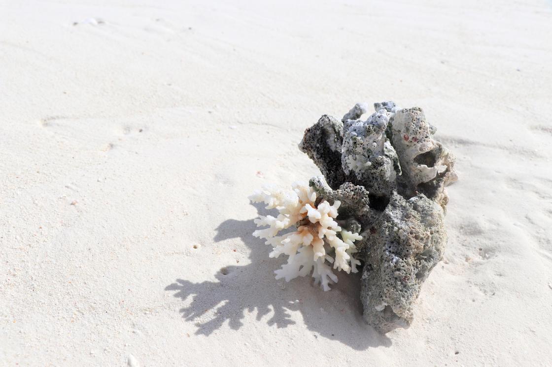 Коралл лежит на пляже