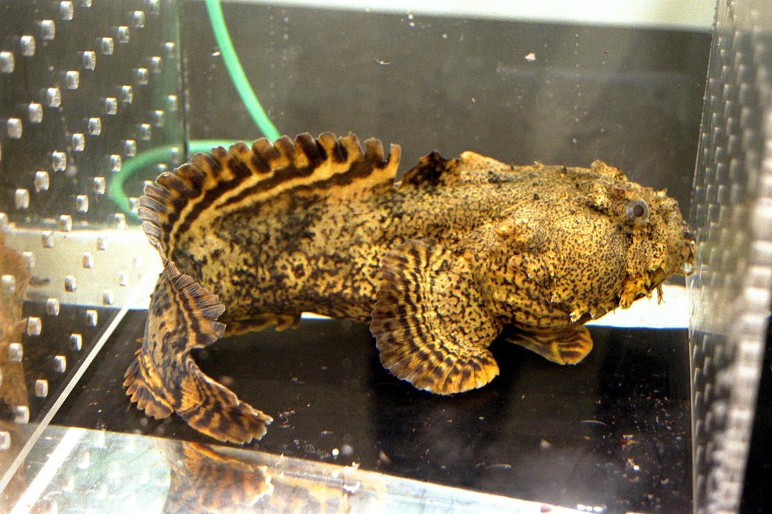 жабун