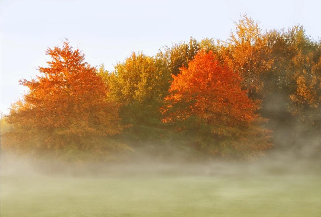 Лес в октябре и туман