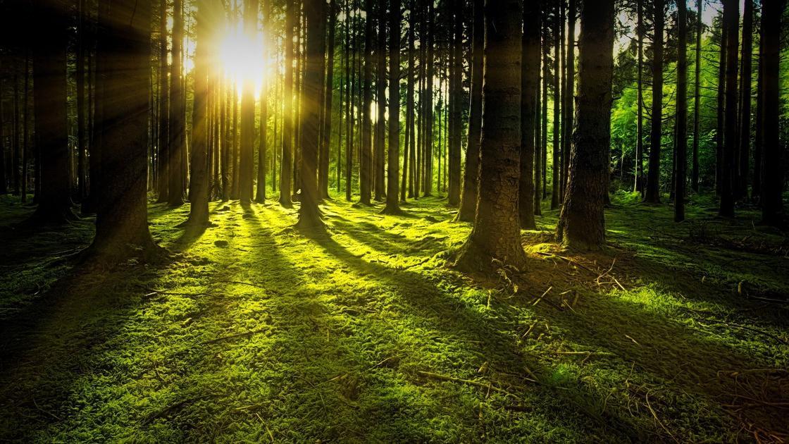 Солнце в лесу