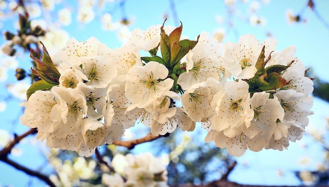 Какой сегодня праздник: календарь праздников на 15 апреля