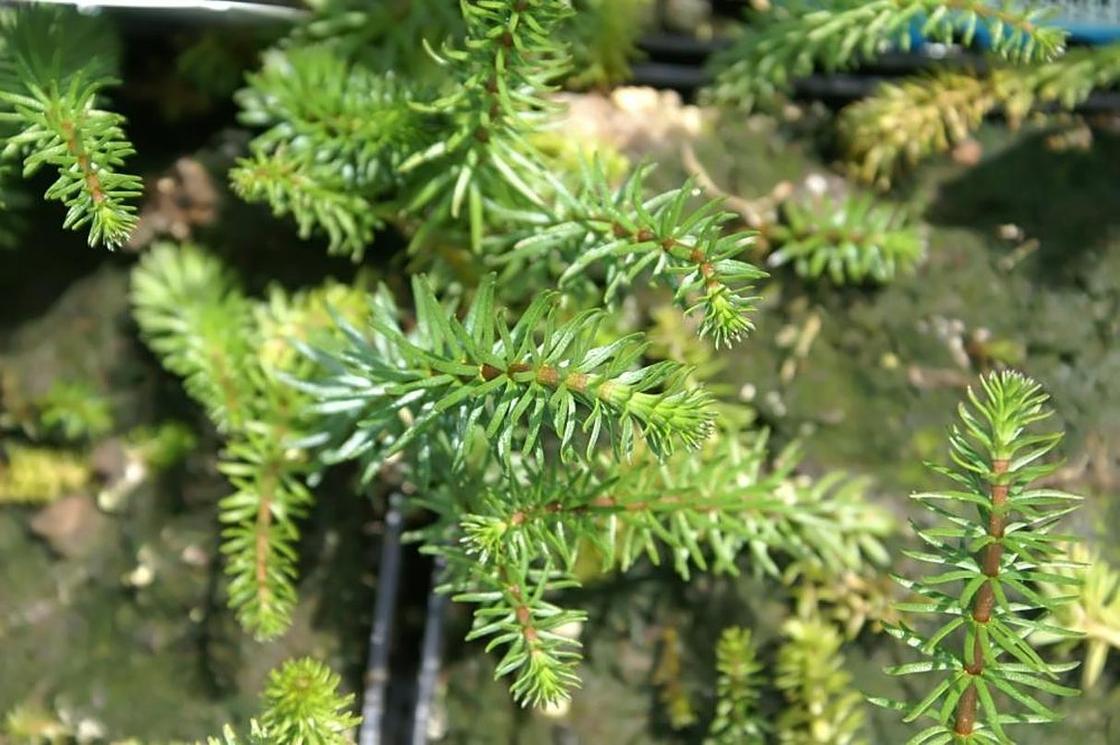 Водные растения: фото, описание, использование