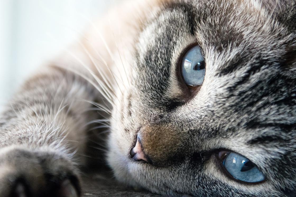 Мальчик убил котенка, скинув его с шестого этажа в Нур-Султане (видео)