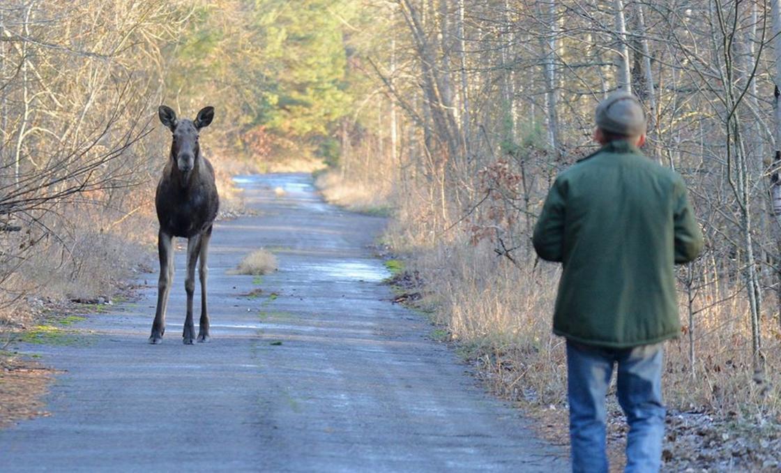 Чернобыльские животные были запечатлены исследователями (фото)