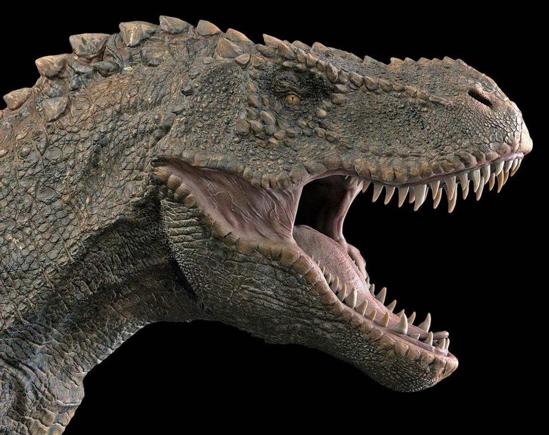 Самые популярные виды динозавров