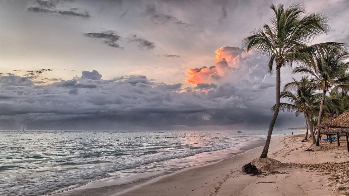 На берегу моря растут пальмы