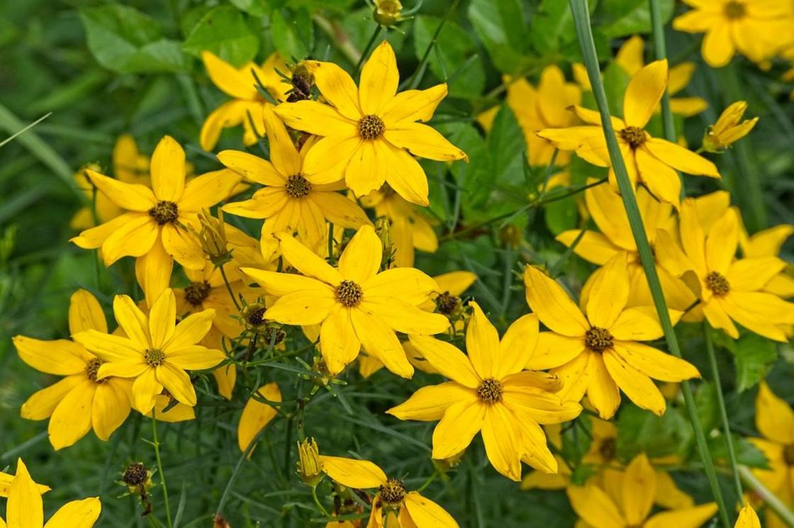 Растение-эколог выращивает биолог из Усть-Каменогорска