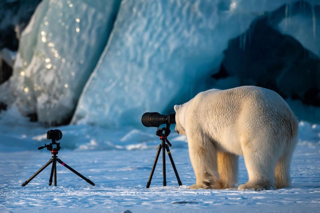 Победители Comedy Wildlife Photography Awards 2018