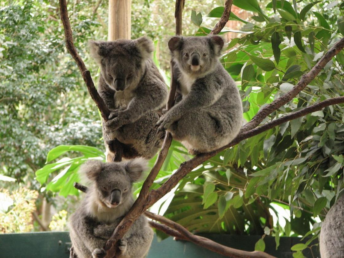 Необычные животные Австралии, которые обитают только там