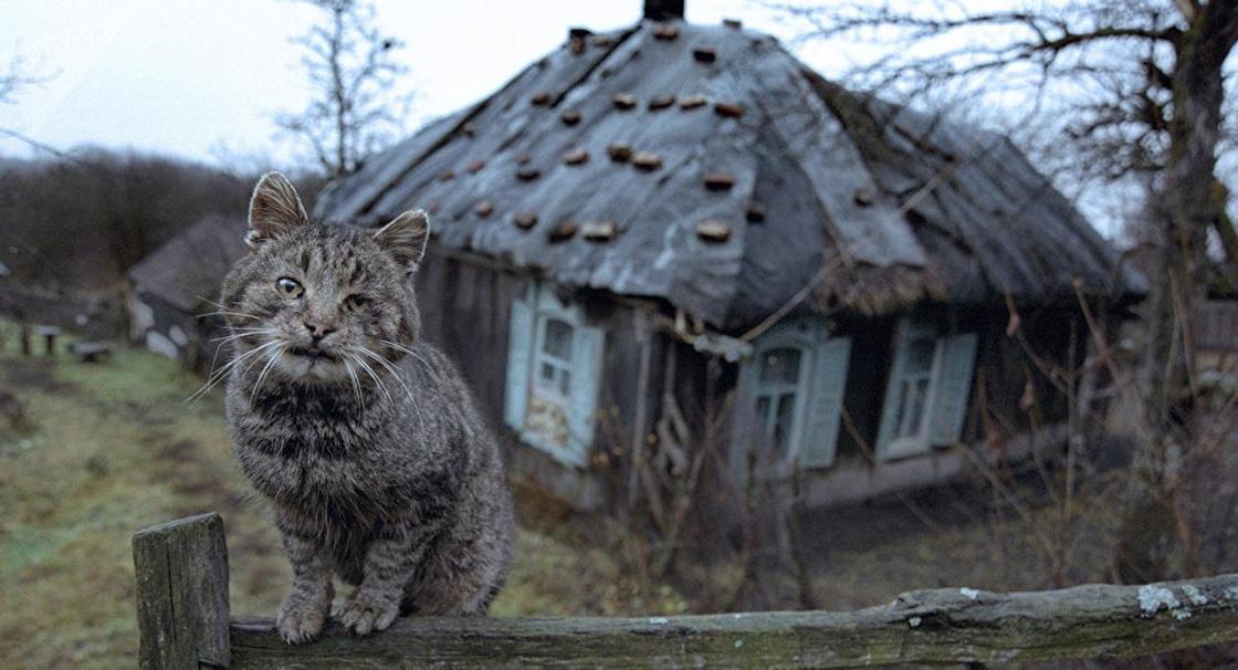 Фото: Sputnik / Андрей Архипов