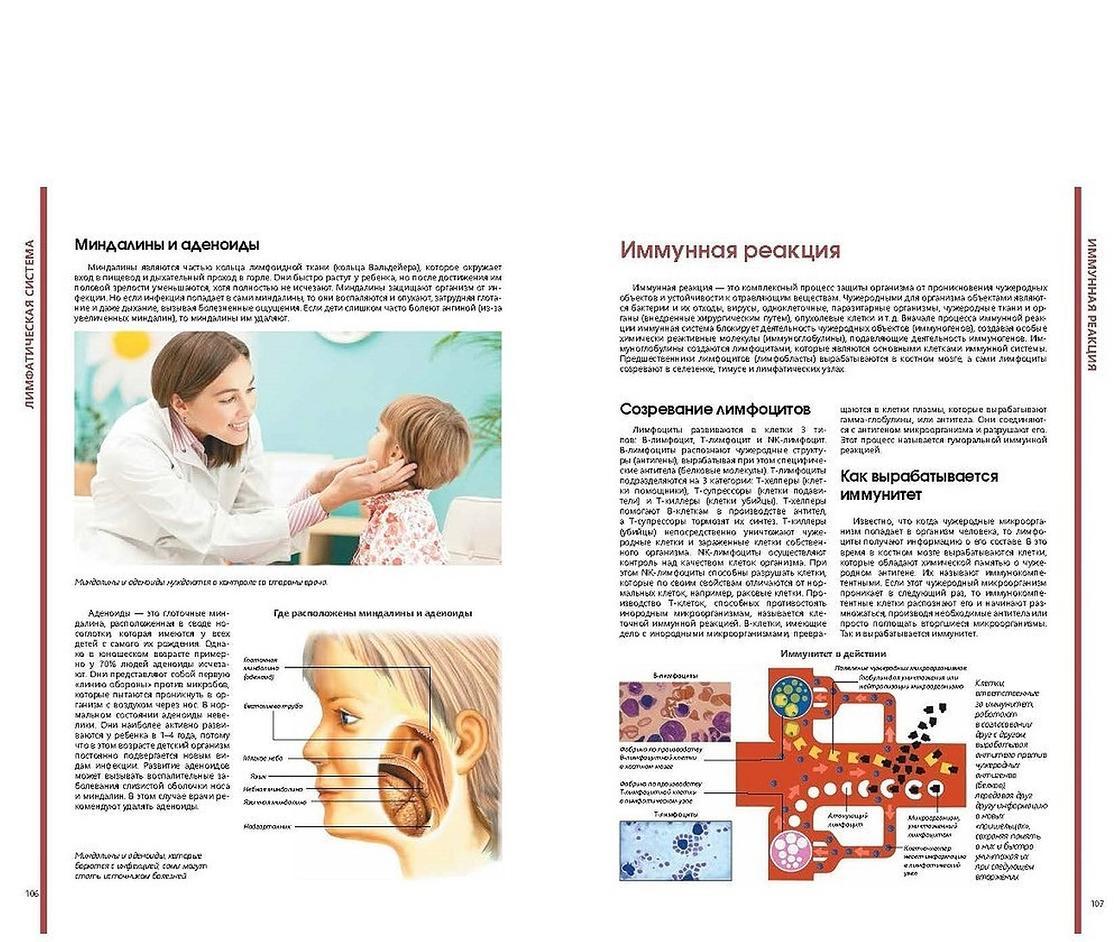 Миндалины и аденоиды