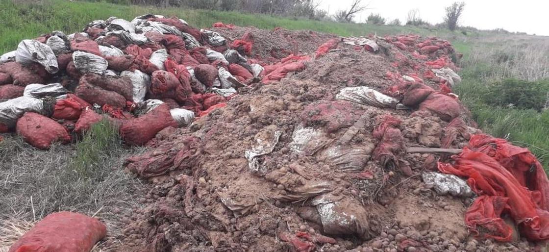 Около 50 тонн картофеля выбросили возле Костаная