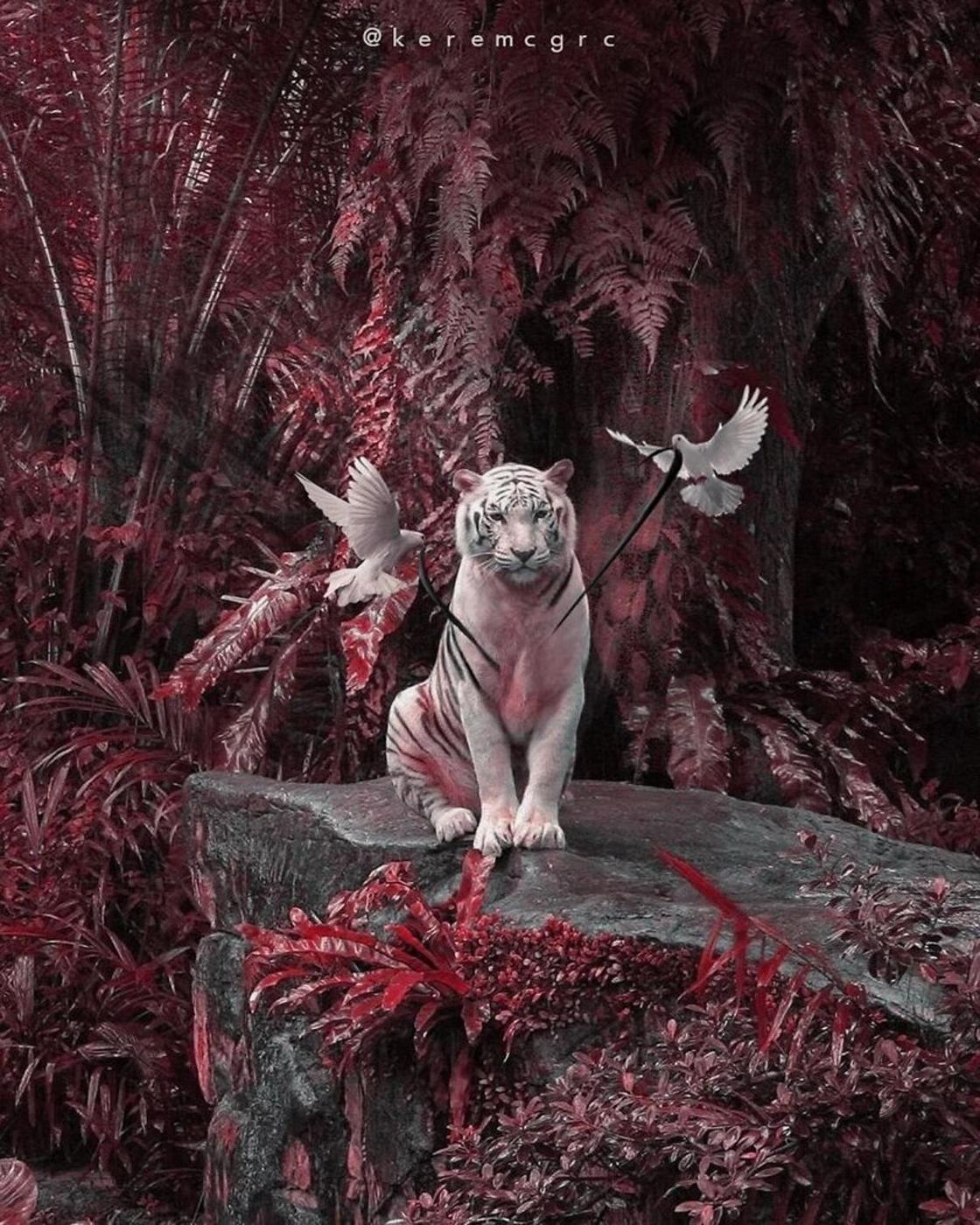 Керем Джигерджи есімді жас фотосуретшінің еңбегін танисыз ба