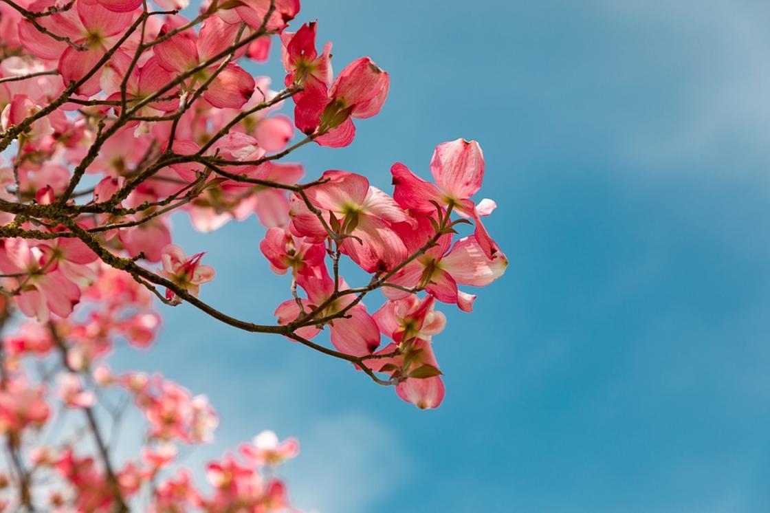 Какой сегодня праздник: календарь праздников на 4 мая