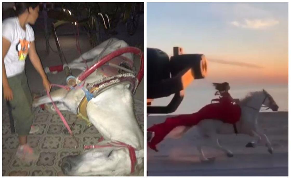 """""""Жылағың келеді"""": Ақтаудағы саябақта күймеге жегілген ат есінен танып қалды (фото, видео)"""