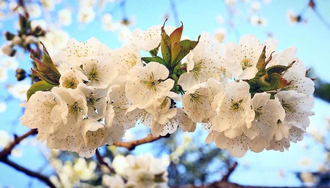 Какой сегодня праздник в мире и Казахстане: календарь 6 апреля