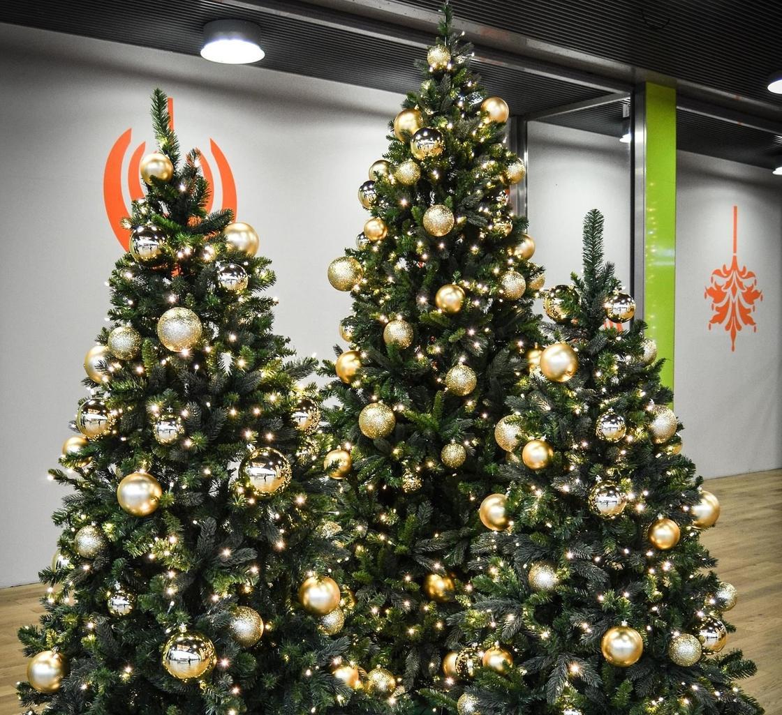 Три елки, украшенные золотыми шарами