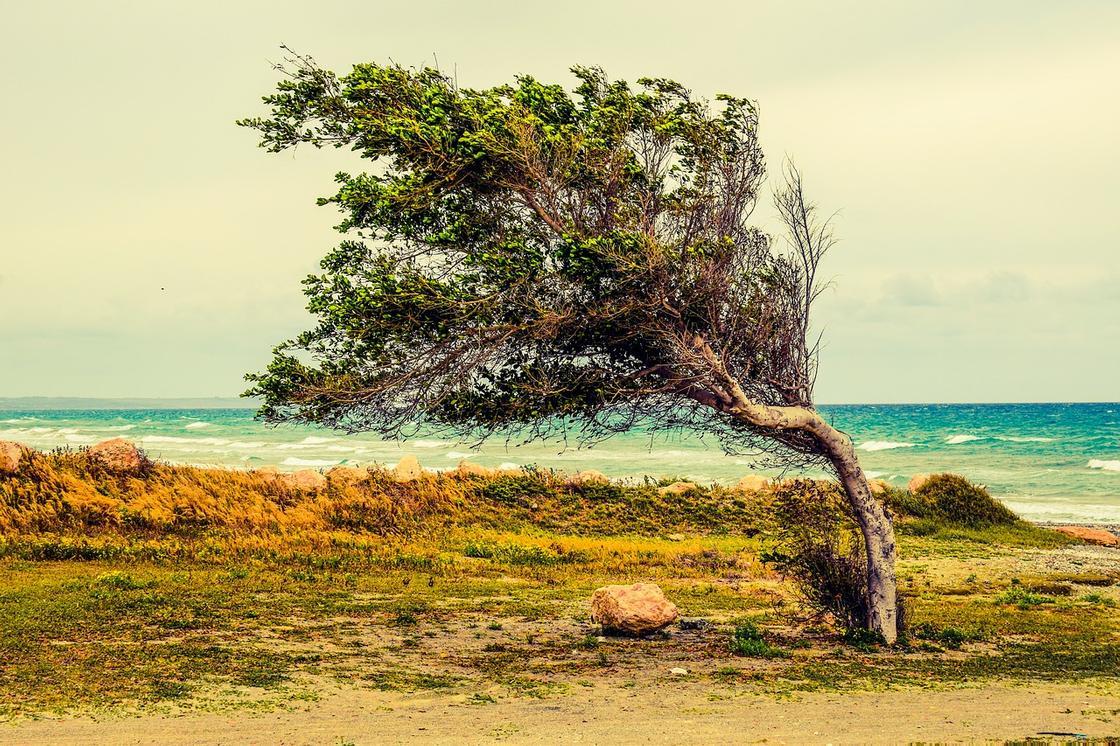 Ветер наклонил дерево
