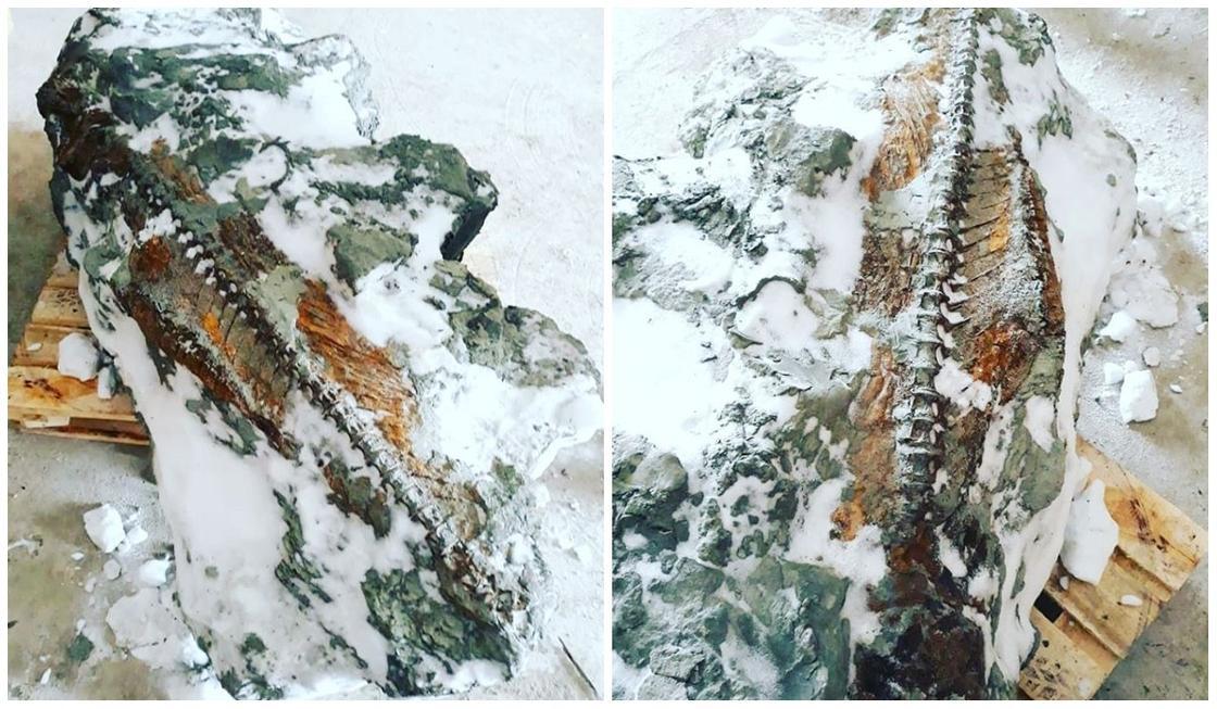 Скелет древней рыбы, жившей 20 млн лет назад, нашли в Костанайской области