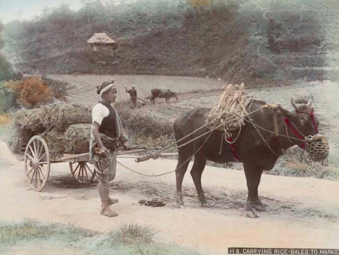 Ферма иесі