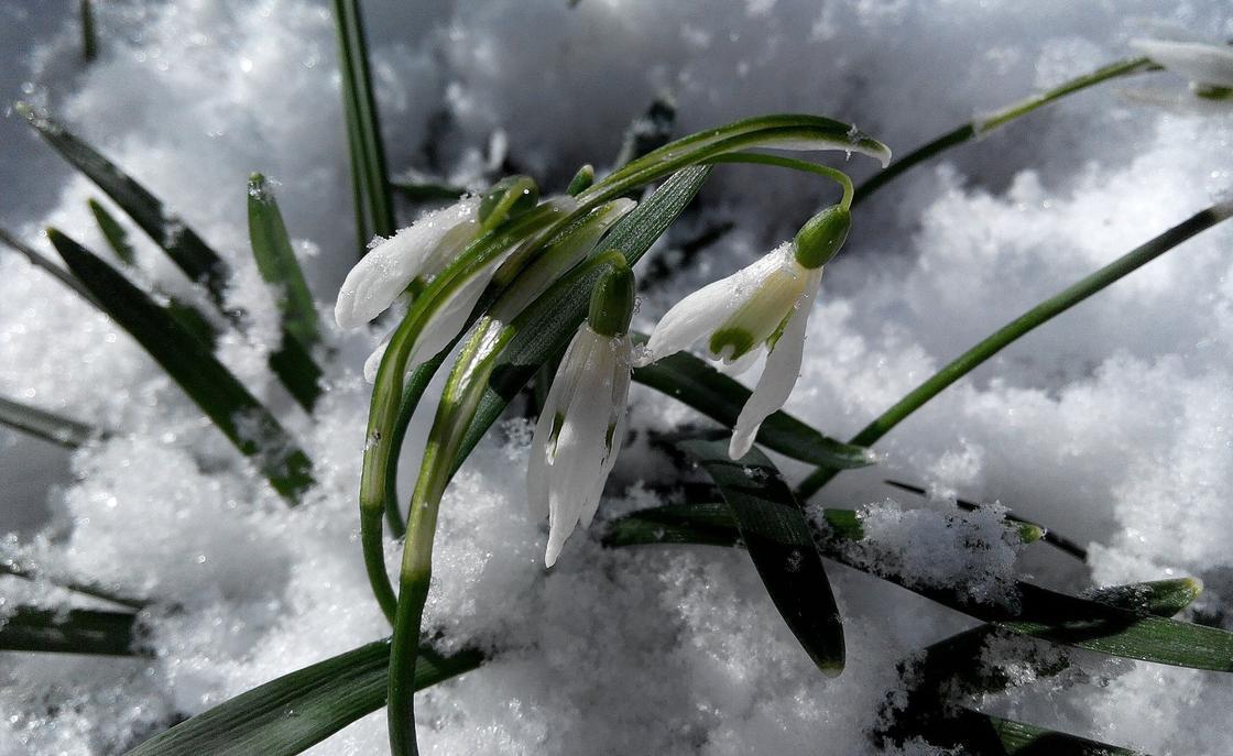 Снег и мороз до 8-ми градусов ожидается в Казахстане