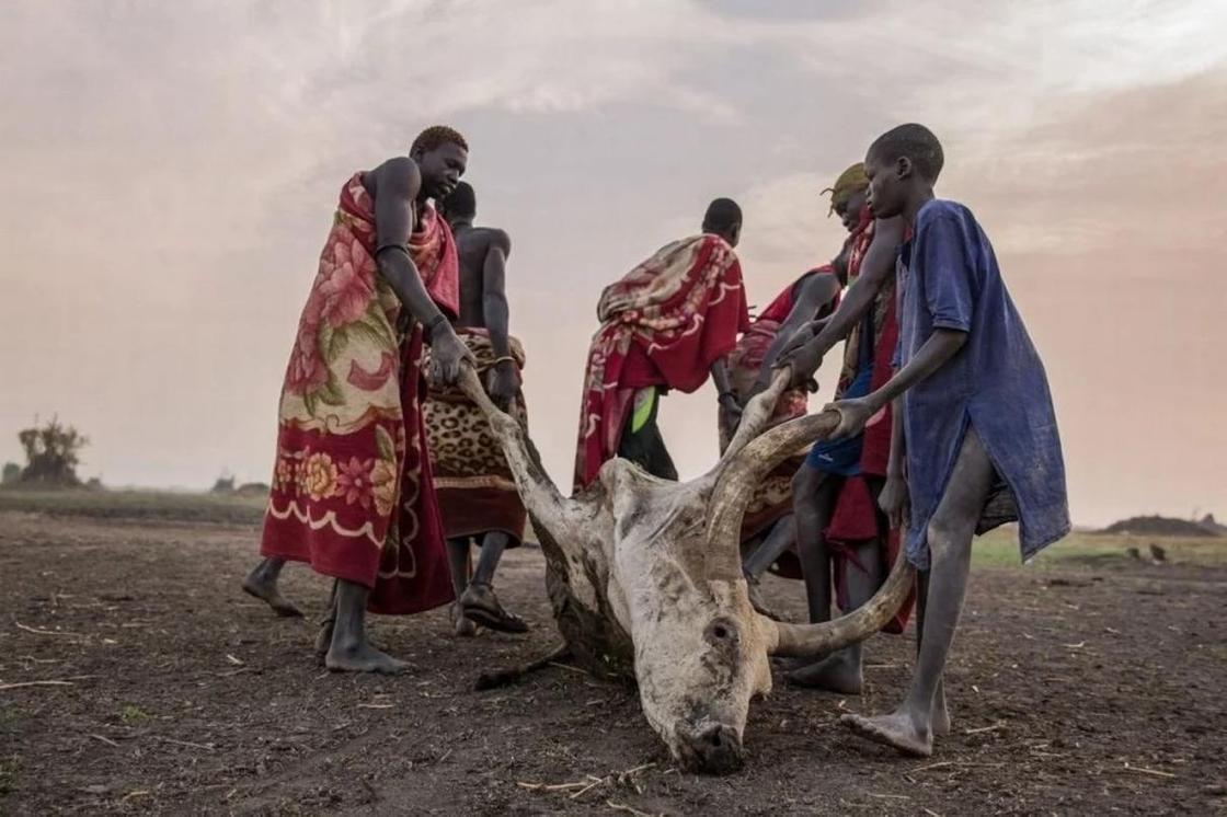 Племя великанов Динка, которое моет головы коровьей мочой