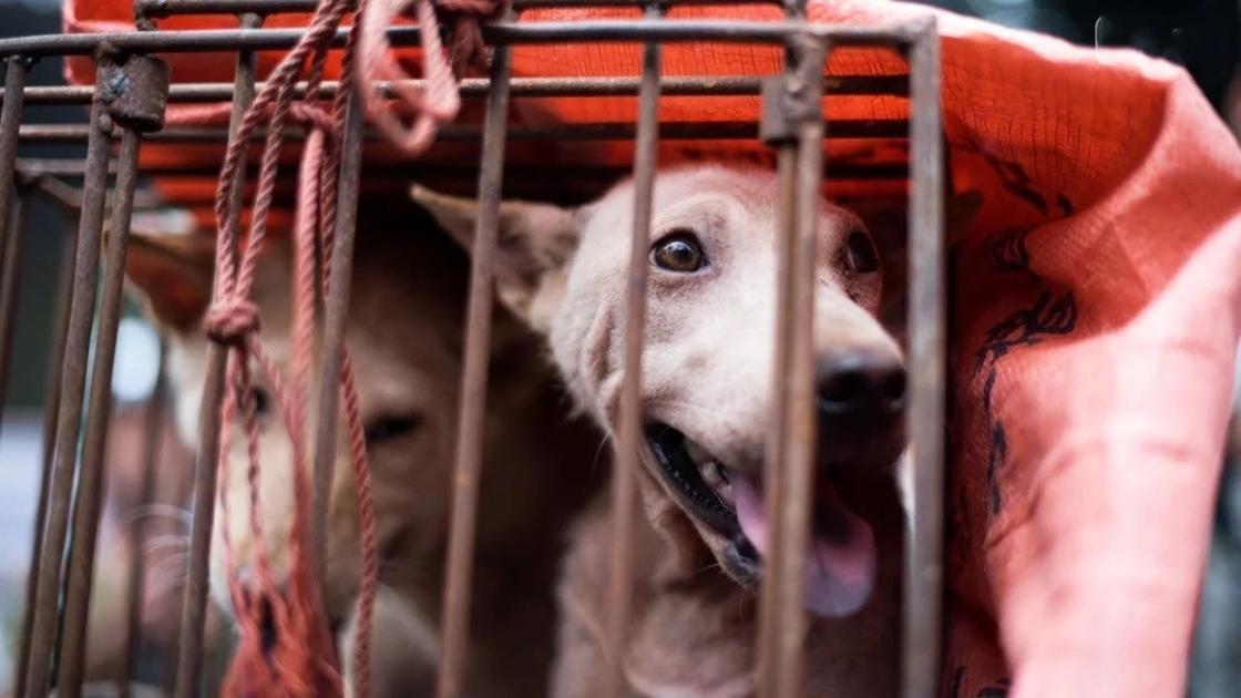 Двое мужчин украли собаку у хозяина и убили ее, чтобы съесть