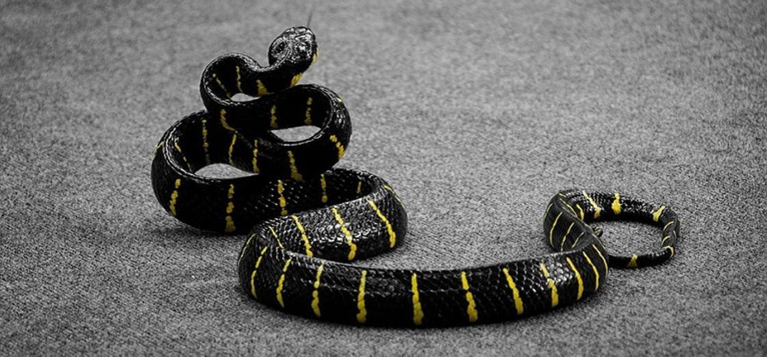 Насильник угрожал жертве своей ядовитой змеей и погиб от ее укуса