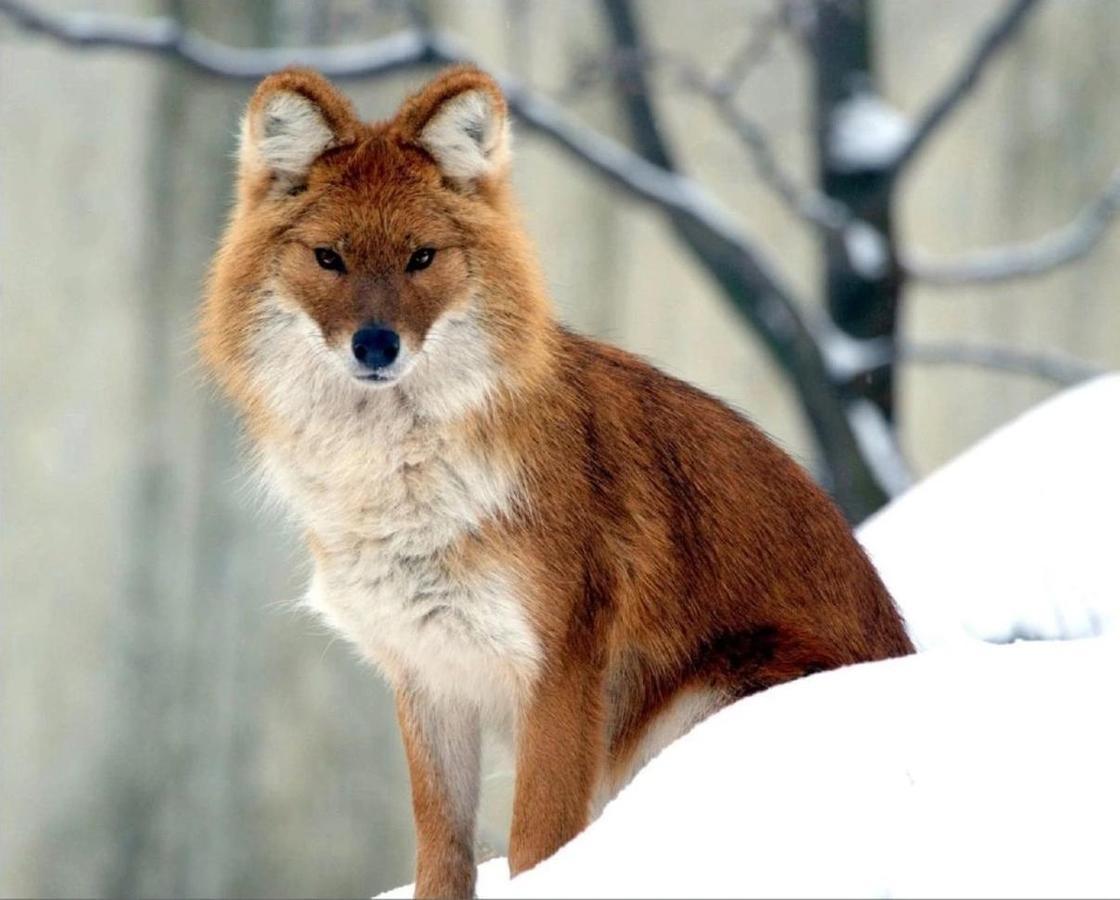 Животный мир Казахстана, занесенный в Красную книгу
