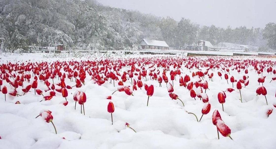 Погода на три дня: мокрый снег и заморозки прогнозируют в Казахстане