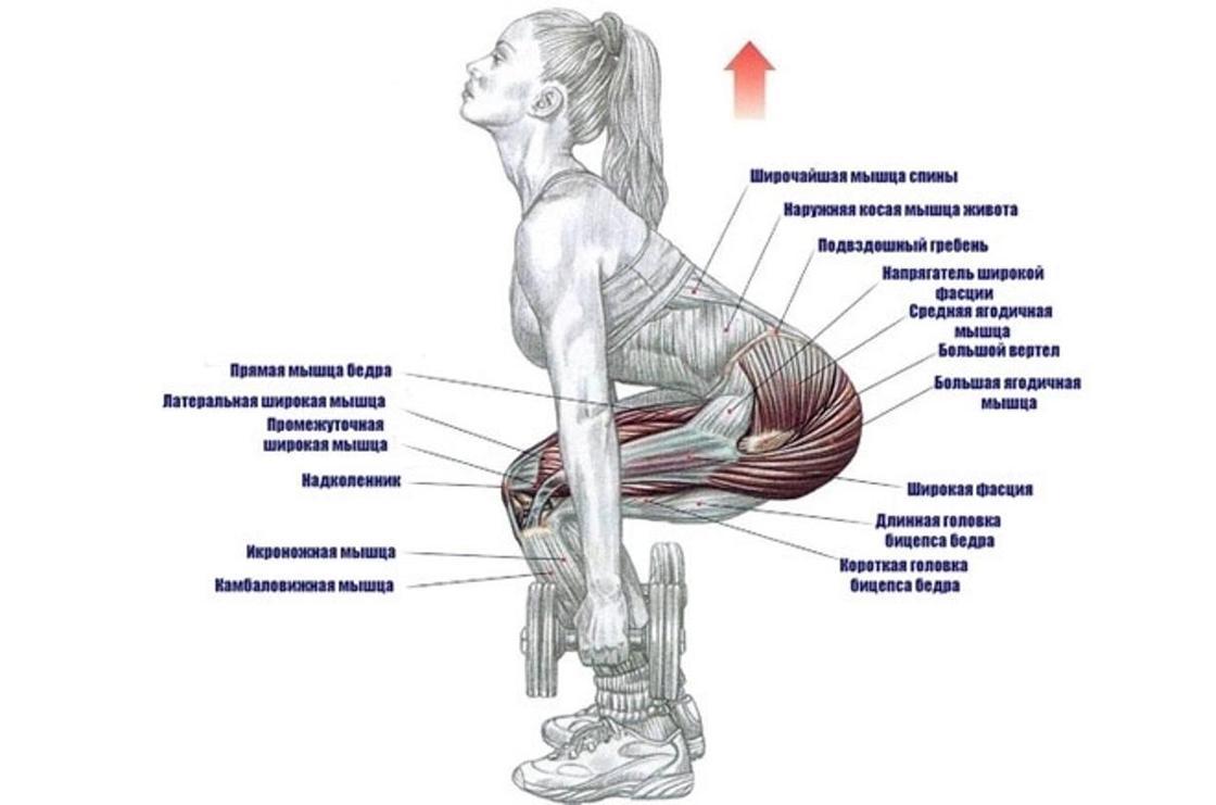 Приседания с гантелями: работающие мышцы