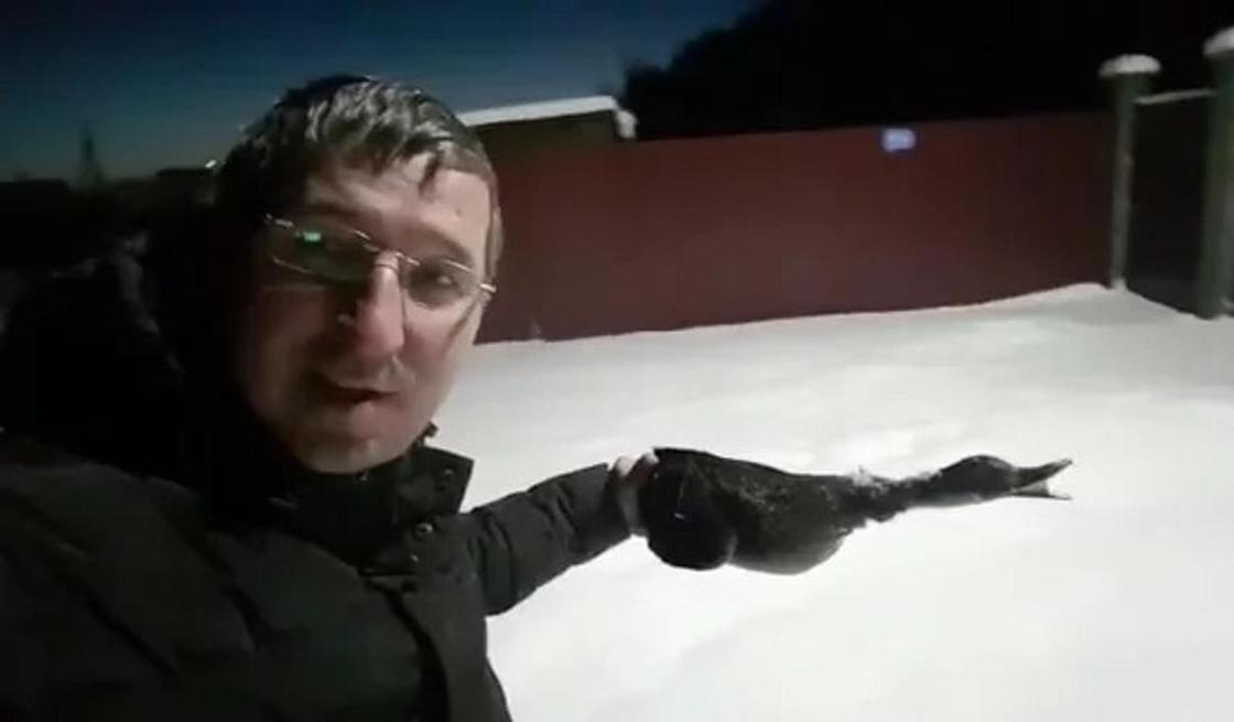 Астанада ұшып бара жатқан үйрек мұз боп қатып қалды. Скриншот: Видеодан