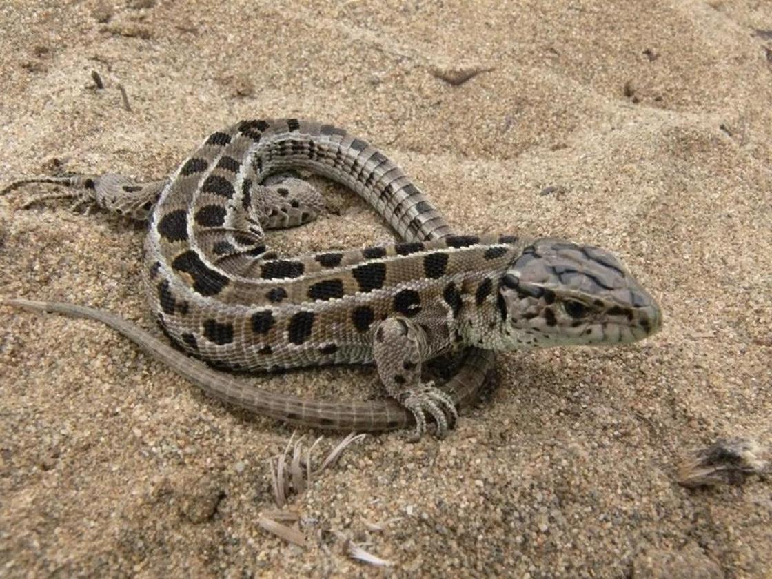 Баянаульский национальный парк: животные