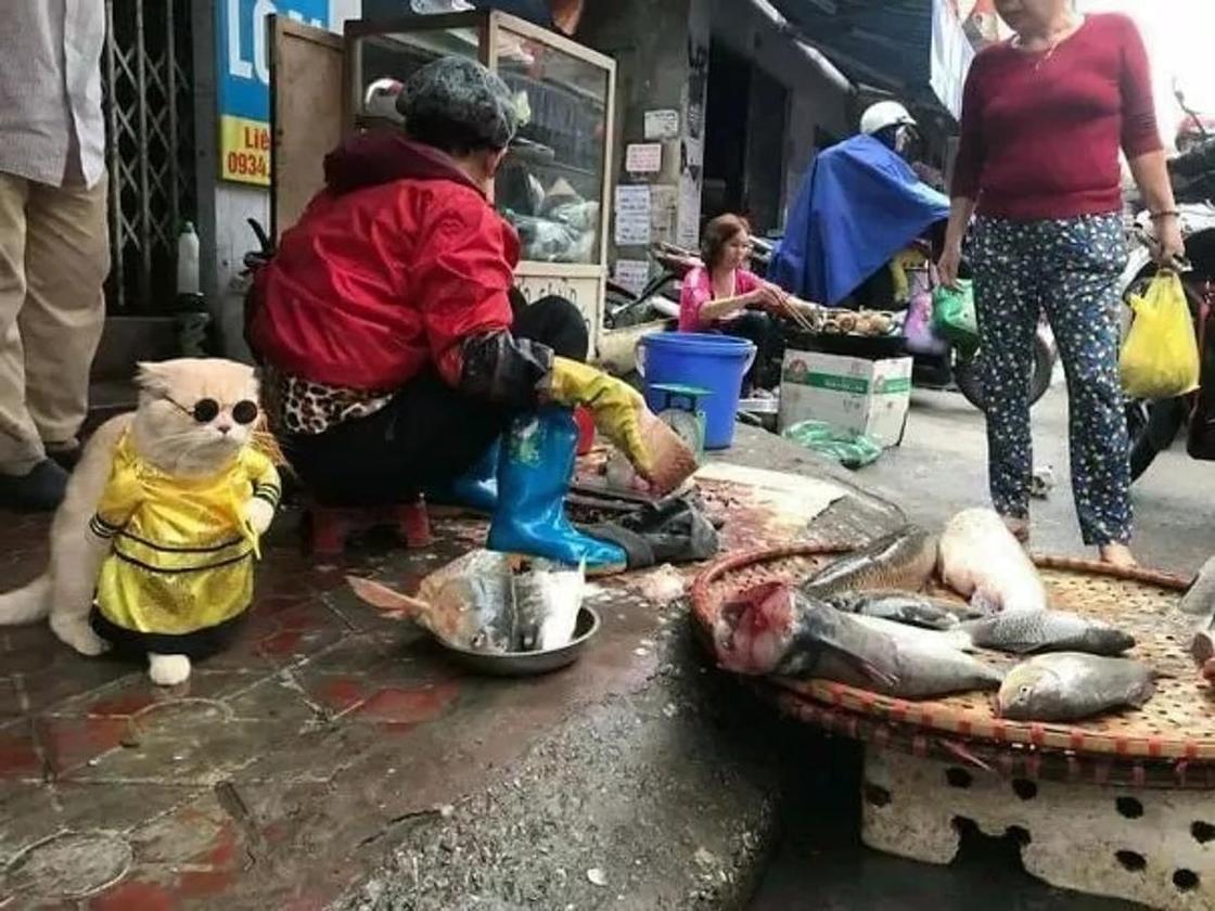 """Самый милый продавец рыбы: котик по кличке """"Собака"""" покорил интернет"""