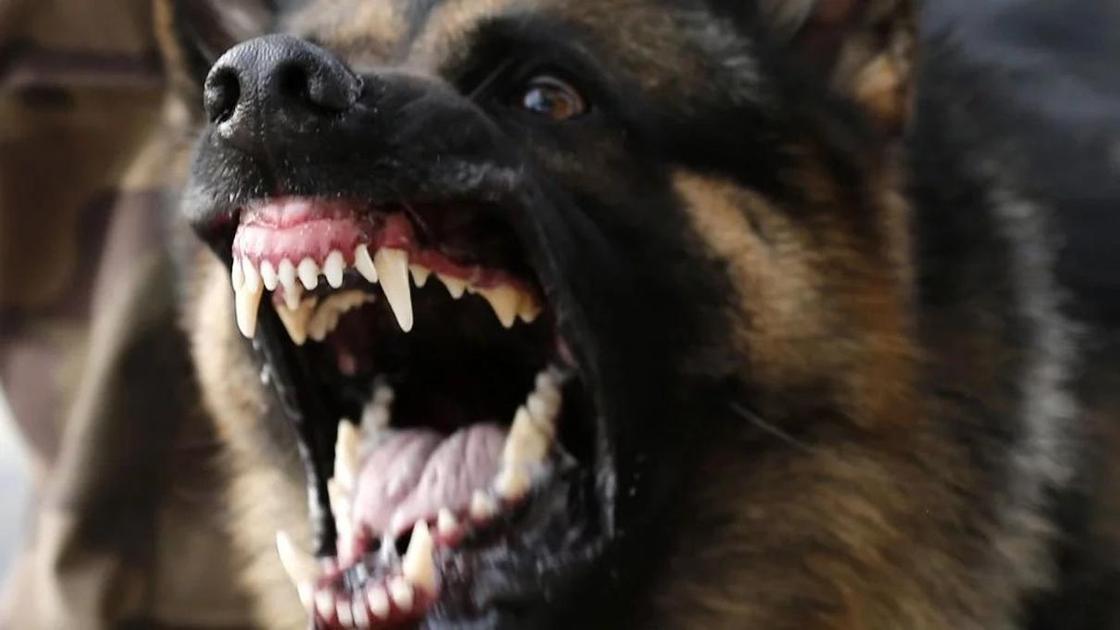 Собака загрызла свою хозяйку насмерть в Уральске
