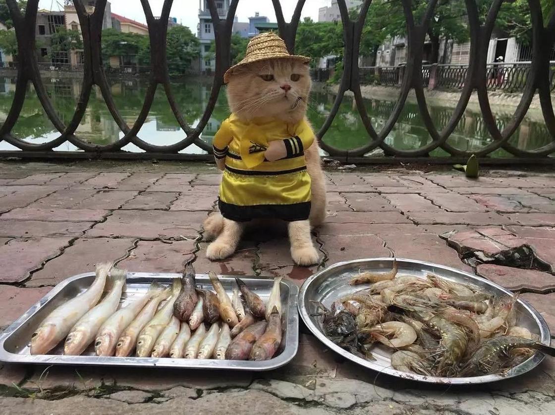 """Самый милый продавец рыбы: котик по кличке """"Собака"""""""