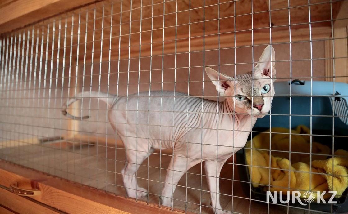 22.03 Еда из ресторана и телевизор: как живут кошки и собаки в отеле в Алматы