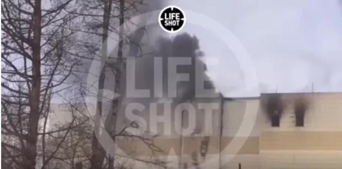 Видеодан кадр: life-shot