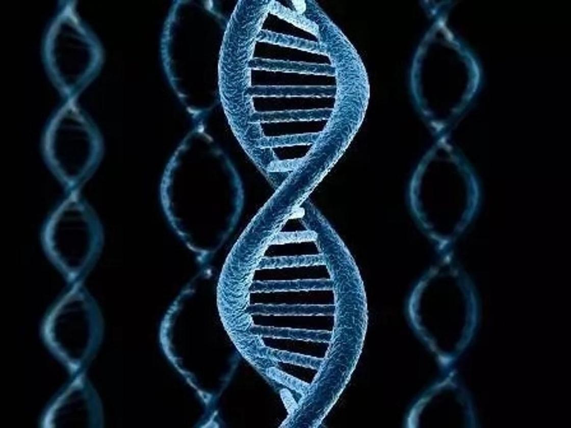 Сколько хромосом у человека здорового?