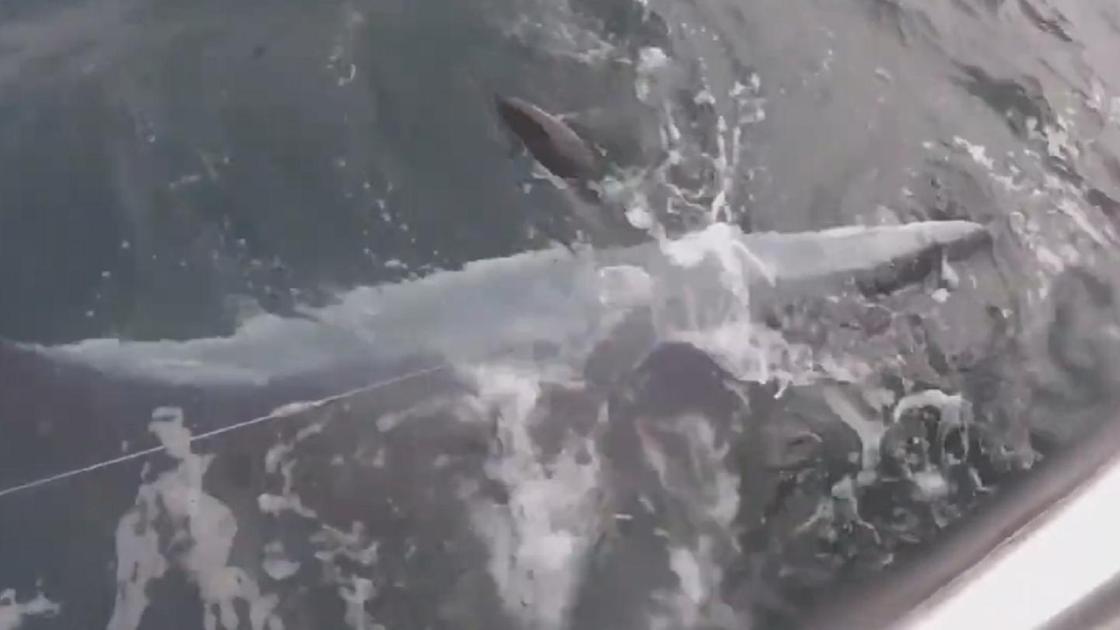 Акула в воде около лодки